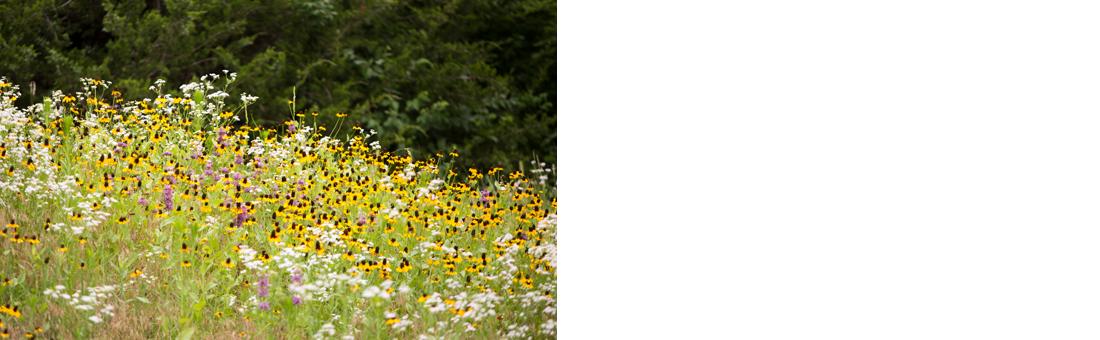 Testimonial Slider Background Image_Tranquility